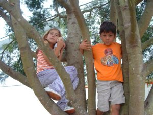 Climbing trees by Manuel Sanvictores
