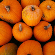 Pumpkins-2009-thumb-500x333-5040