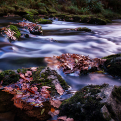This image is called flow. It shows some autumnal oak leaves floating in a stream and was found at ben matthews Flickr photostream. It is used under the terms of the Creative Commons Attribution-NonCommercial-ShareAlike 2.0 Generic license.